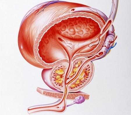 Хламидиоз хламидийная инфекция лечение причины