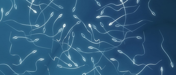 От чего происходит агглютинация сперматозоидов